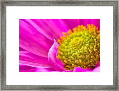 Curly Que Framed Print by Joan Herwig
