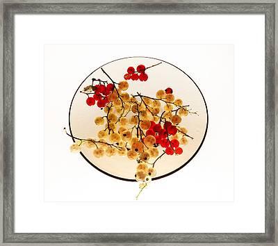 Currants On A Plate Framed Print by Vitaliy Gladkiy