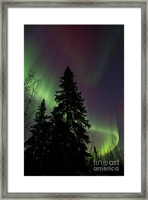 Curtain Of Colours Framed Print by Priska Wettstein