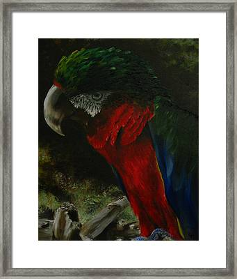 Curtis The Parrot Framed Print by Sherry Robinson