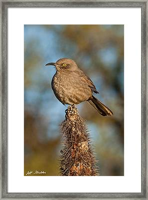 Curve-billed Thrasher On A Cactus Framed Print