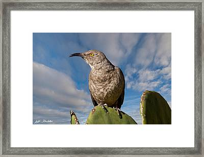 Curve-billed Thrasher On A Prickly Pear Cactus Framed Print