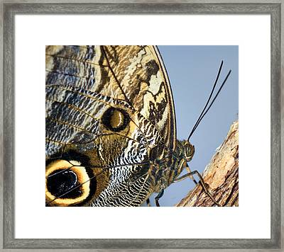 Curve Of A Butterfly Framed Print