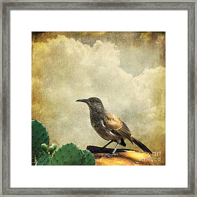 Curved Bill Thrasher Framed Print