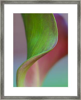 Framed Print featuring the photograph Curves Of A Calla Lily by Zoe Ferrie