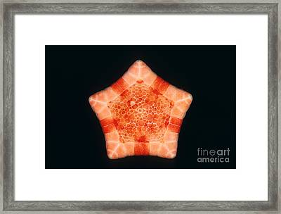 Cushion Star Framed Print