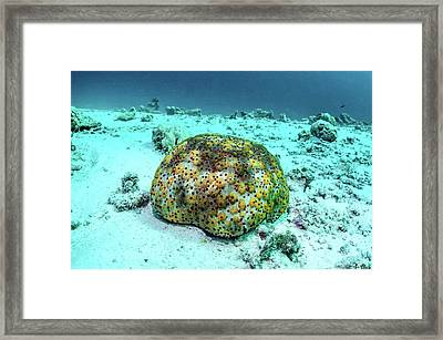 Cushion Star Framed Print by Georgette Douwma