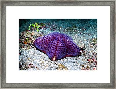 Cushion Starfish On Sea Bed Framed Print
