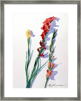 Cut Gladiols Framed Print by Mark Lunde