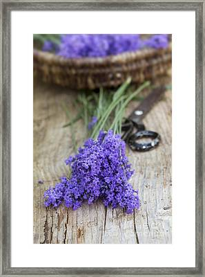 Cut Lavender Framed Print by Tim Gainey