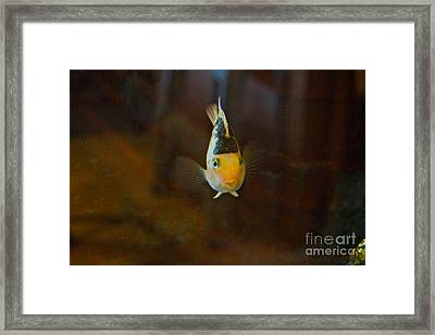 Cute And Content Framed Print by Byron Varvarigos