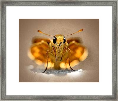 Framed Print featuring the painting Cute And Curious Brown Butterfly by Tracie Kaska