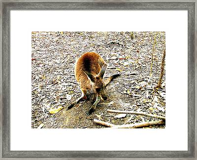 Cute And Lovable Framed Print by John Potts