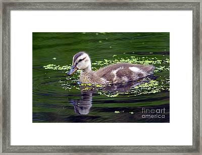 Cute As A Button Framed Print