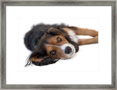 Cute Black Tan And White Pup Framed Print by Natalie Kinnear