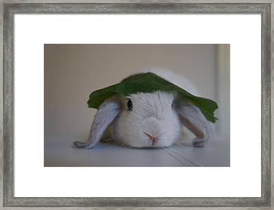 Cute Bunny Framed Print by Nikki  Wang