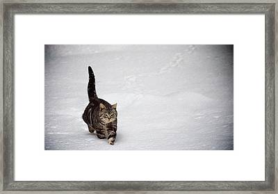 Cute Cat In Snow Framed Print