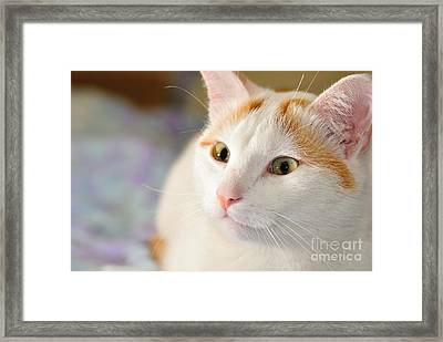 Turkish Van Cat Portrait Framed Print by Martin Capek