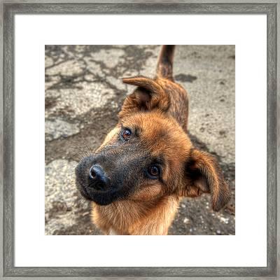 Cute Dog Closeup Framed Print