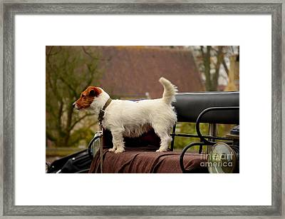 Cute Dog On Carriage Seat Bruges Belgium Framed Print