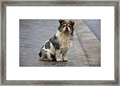 Cute Dog Sits On Pavement And Stares At Camera Framed Print