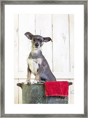Cute Dog Washtub Framed Print by Edward Fielding