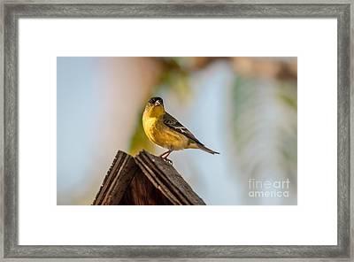 Cute Finch Framed Print