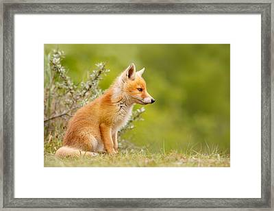 Pinocchio - Cute Fox Kit Framed Print by Roeselien Raimond