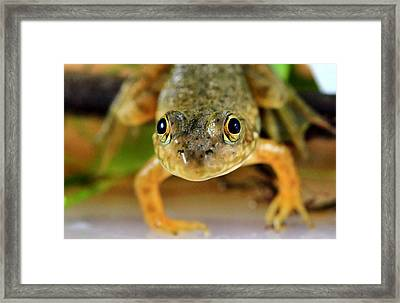 Cute Frog Face Framed Print by Dan Sproul