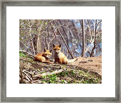 Cute Kit Foxes Together 1 Framed Print