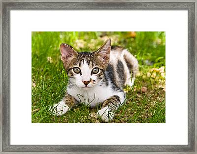 Cute Kitty In The Grass Framed Print by Cristina-Velina Ion