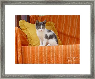 Framed Print featuring the photograph Cute Kitty by Vicki Spindler