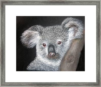 Cute Koala Framed Print by Mary Mayes