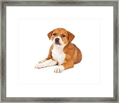 Cute Mixed Breed Puppy Laying Framed Print
