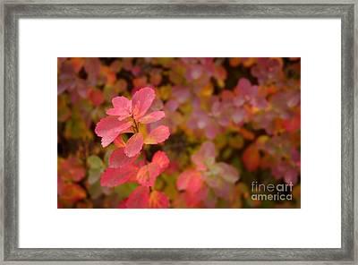 Cute Pink Plant Framed Print by Jolanta Meskauskiene