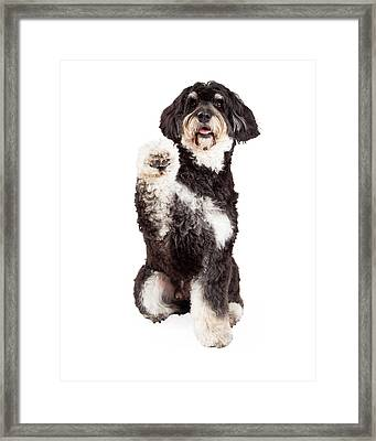 Cute Poodle Mix Breed Dog Shaking Paw Framed Print by Susan Schmitz