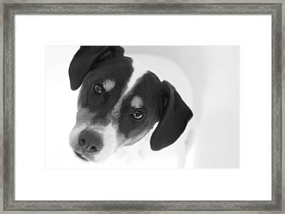Cute Pose Jack Russell Terrier Framed Print by Natalie Kinnear