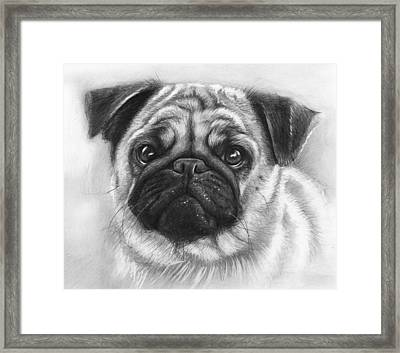 Cute Pug Framed Print by Olga Shvartsur
