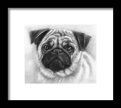 Dog Drawings Framed Prints