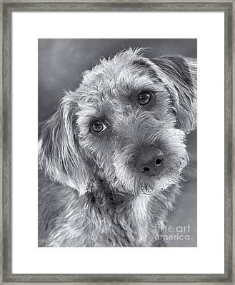 Cute Pup In Black And White Framed Print by Natalie Kinnear