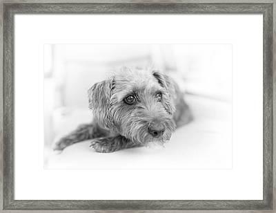 Cute Pup On Watch Framed Print by Natalie Kinnear