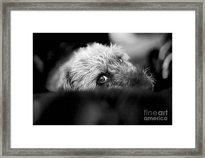 Cute Pup Sneek A Peek Framed Print by Natalie Kinnear