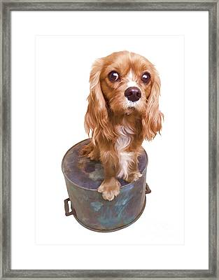 Cute Puppy Card Framed Print by Edward Fielding