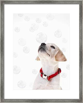 Cute Puppy With A Soap Bubble On His Nose. Framed Print