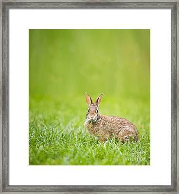 Cute Rabbit Framed Print