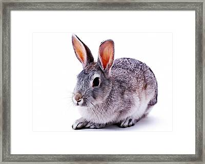 Cute Rabbit Framed Print by Lanjee Chee