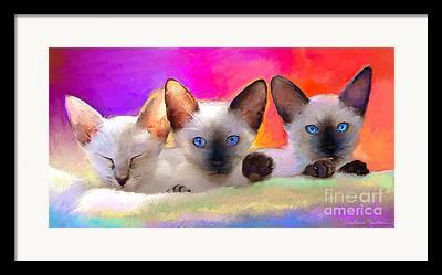 Domestic Short Hair Cat Drawings Framed Prints