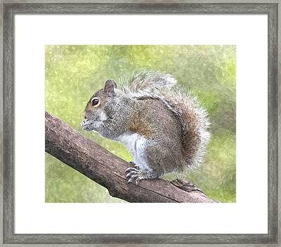 Cute Squirrel Framed Print by Gianfranco Weiss