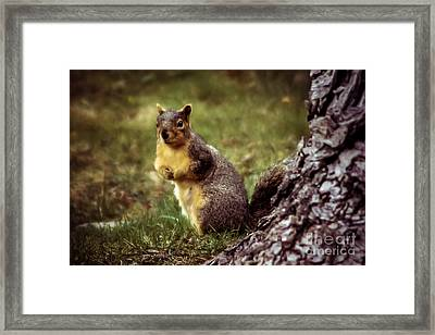 Cute Squirrel Framed Print by Robert Bales