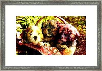Cute Terrier Puppies Framed Print by Marvin Blaine